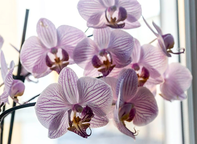 orkidé 2