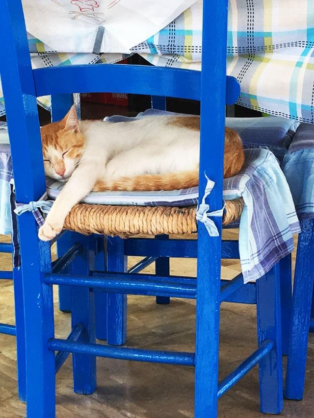 vilande katt