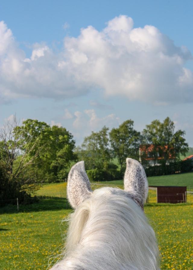 häst i hage-1