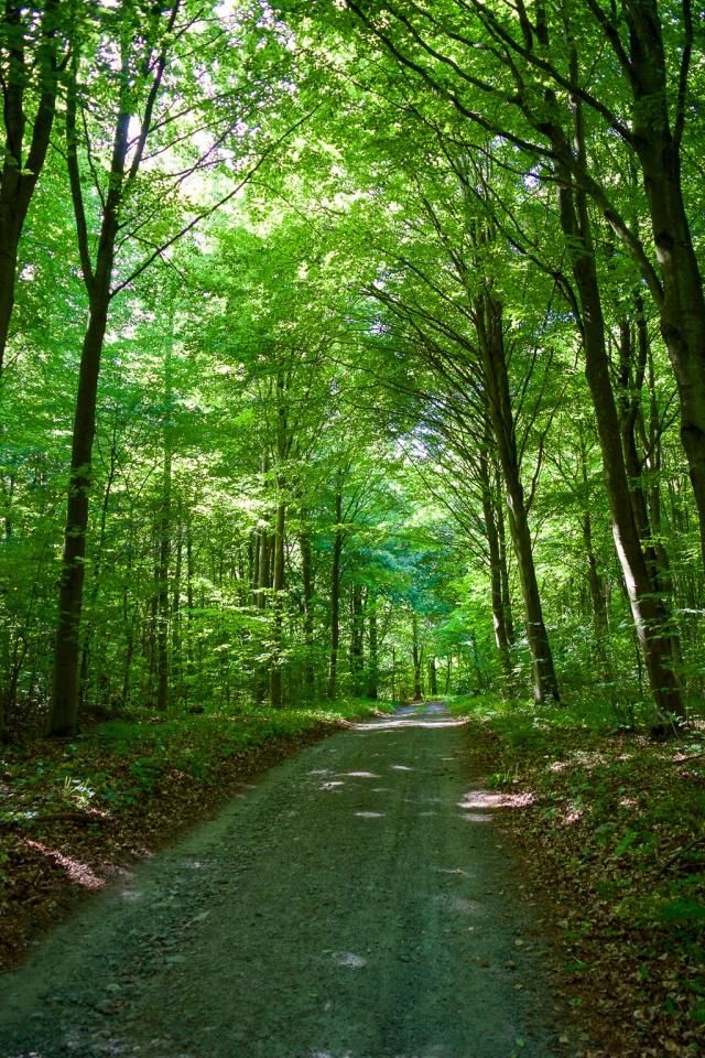 löpning skog-1